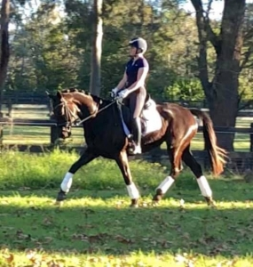 Dolce by Imp stallion Don Duchovny out of a Jazz mare