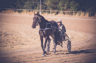 List your Harness Horse or Stallion at Stud here